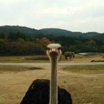 ちょwすみません。ゾウを撮りたいのでどけてもらえますか?ダチョウさん!