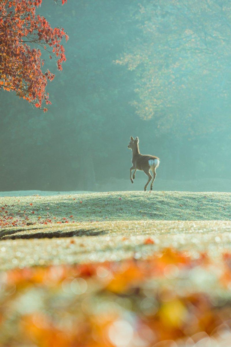 鹿のジャンプ3連。 やっぱ途中の空中静止イイわぁ pic.twitter.com/kL7R28ilpO