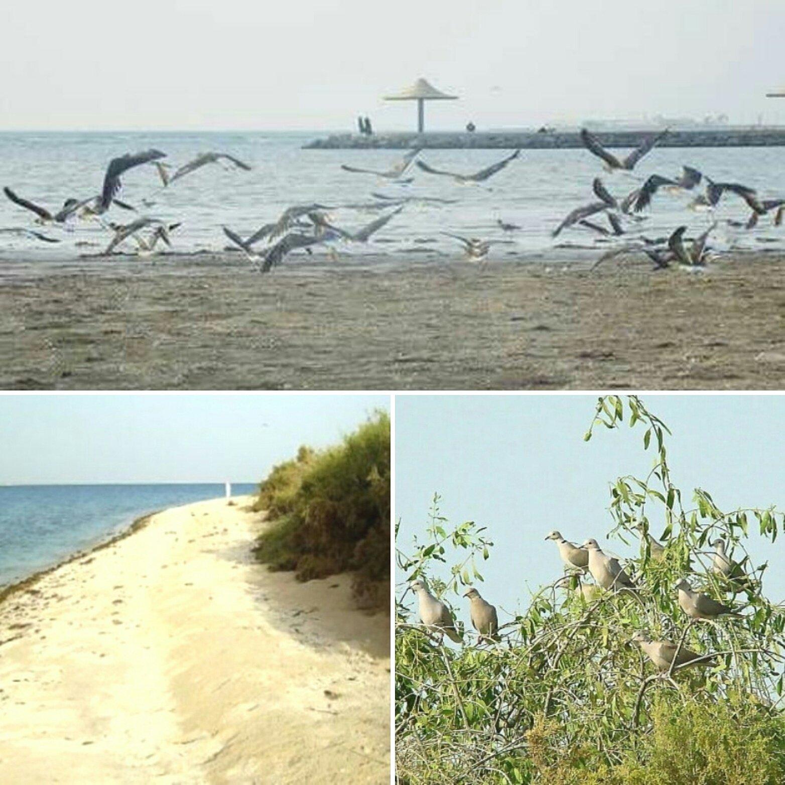 القنفذة نت على تويتر جزيرة ام القماري واجهة القنفذة السياحية ووجهة الطيور المهاجرة Https T Co M9mpf42xgq القنفذة المظيلف القوز حلي السياحة السعودية Https T Co Pmlwzumwzo