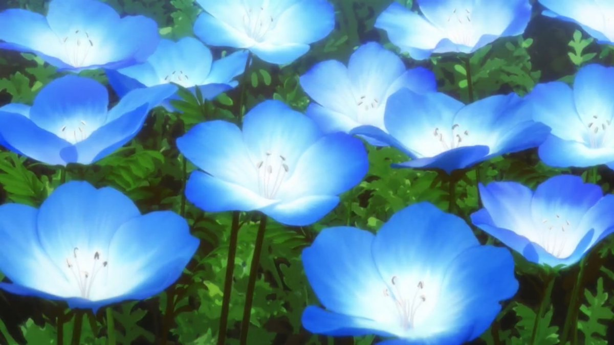Blue variance on twitter flower baby blue eyes nemophila blue variance on twitter flower baby blue eyes nemophila menziesii meaning i forgive you success everywhere lovelypitiable the ancient magus bride izmirmasajfo