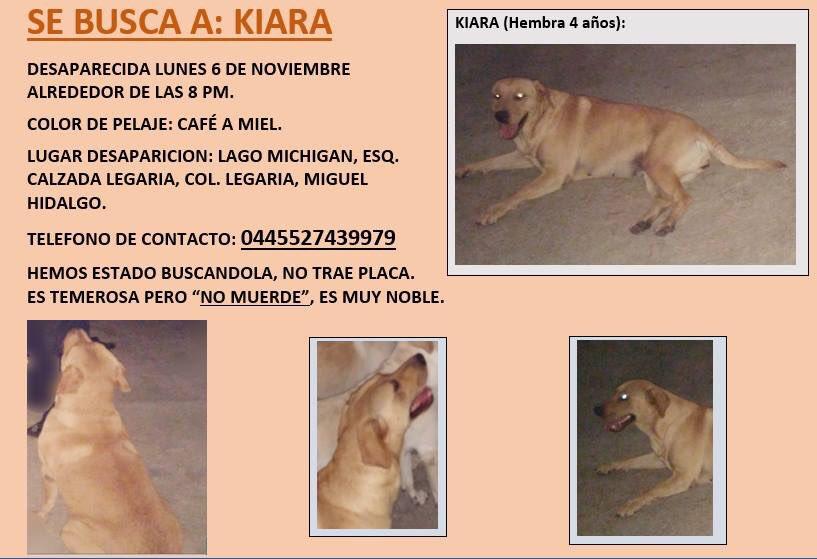 RT Por favor #Sebusca #Kiara #MiguelHidalgo #CDMX<br>http://pic.twitter.com/vyyKTapykf