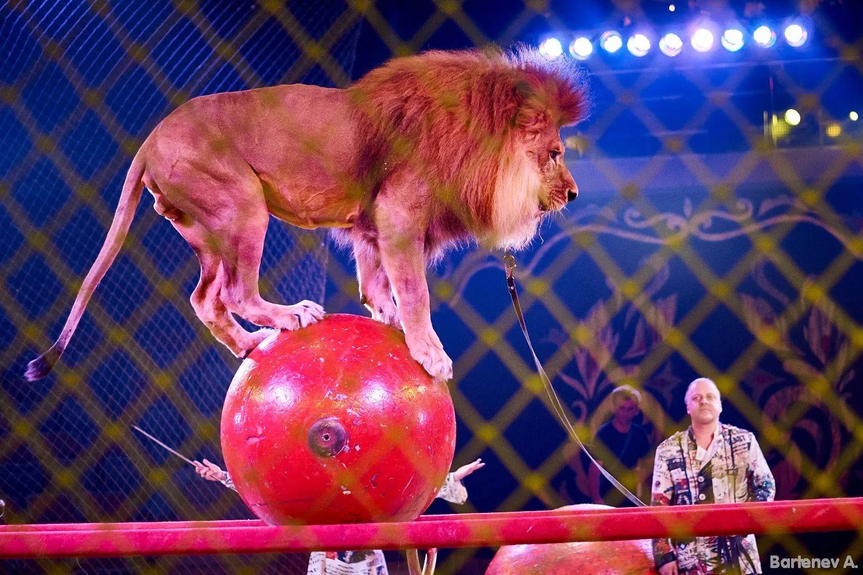 Картинки о цирке для школьников