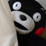 ・・・おやくま〜☆ pic.twitter.com/pxQZ4KmN1L
