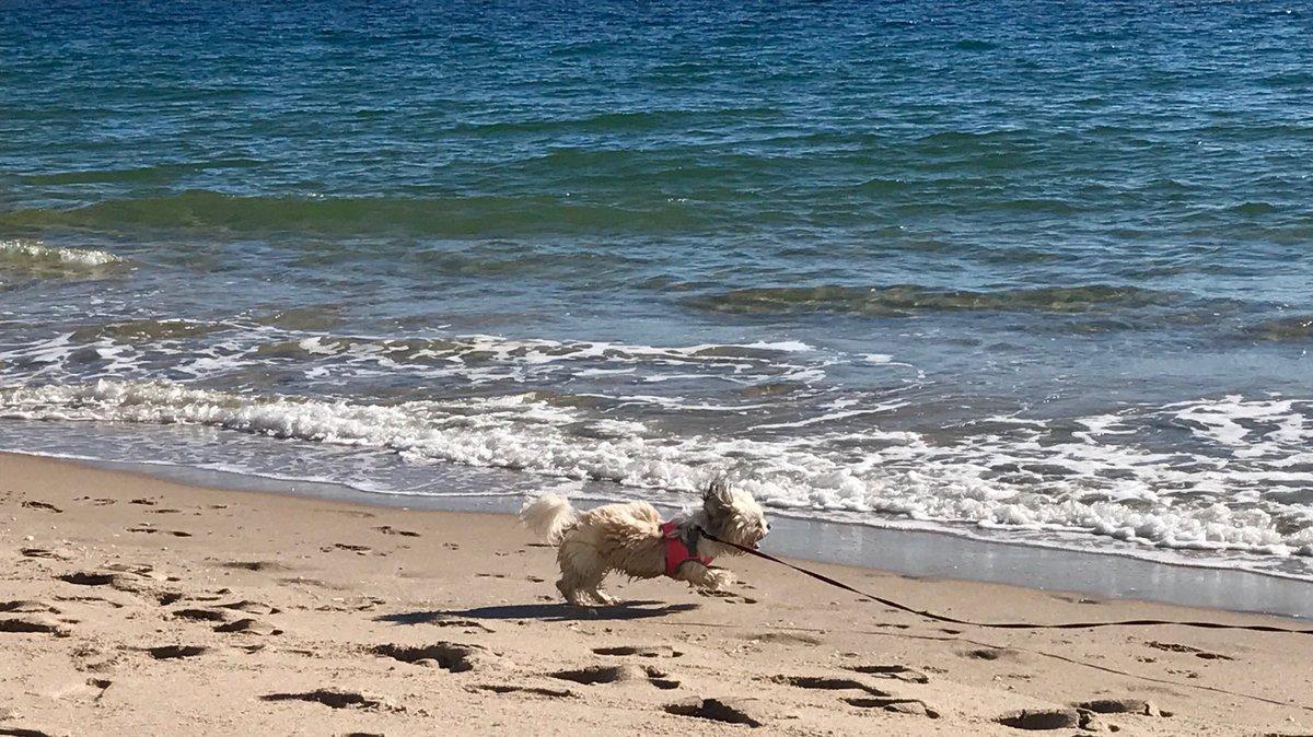 Happy dance #beach #mybeach #ocean #puppy<br>http://pic.twitter.com/ycrc7sHn2T