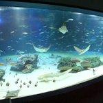 東京・池袋のサンシャイン水族館で魚が大量死 sankei.com/affairs/news/1… p…