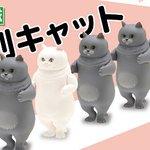 カワイイ!ずらりと並んだぽちゃカワ猫 「並び隊」第2弾は「整列キャット」 - ねとらぼ nlab.i…