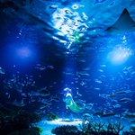 【酸欠か】池袋のサンシャイン水族館、大型水槽で魚1235匹が大量死news.livedoor.com…