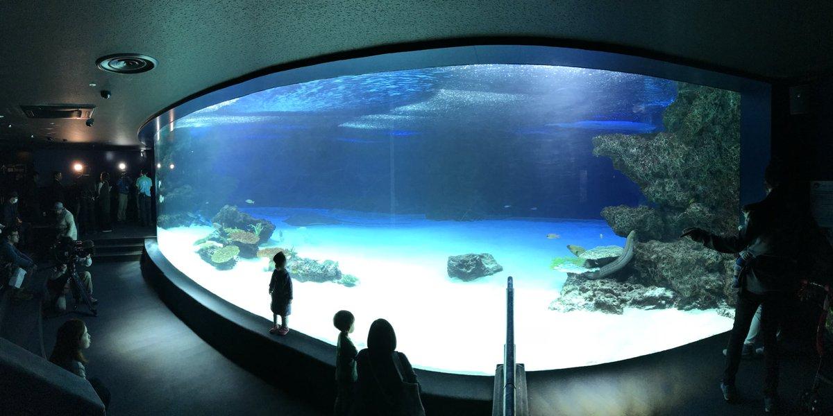 生体が94%減った水槽 #サンシャイン水族館