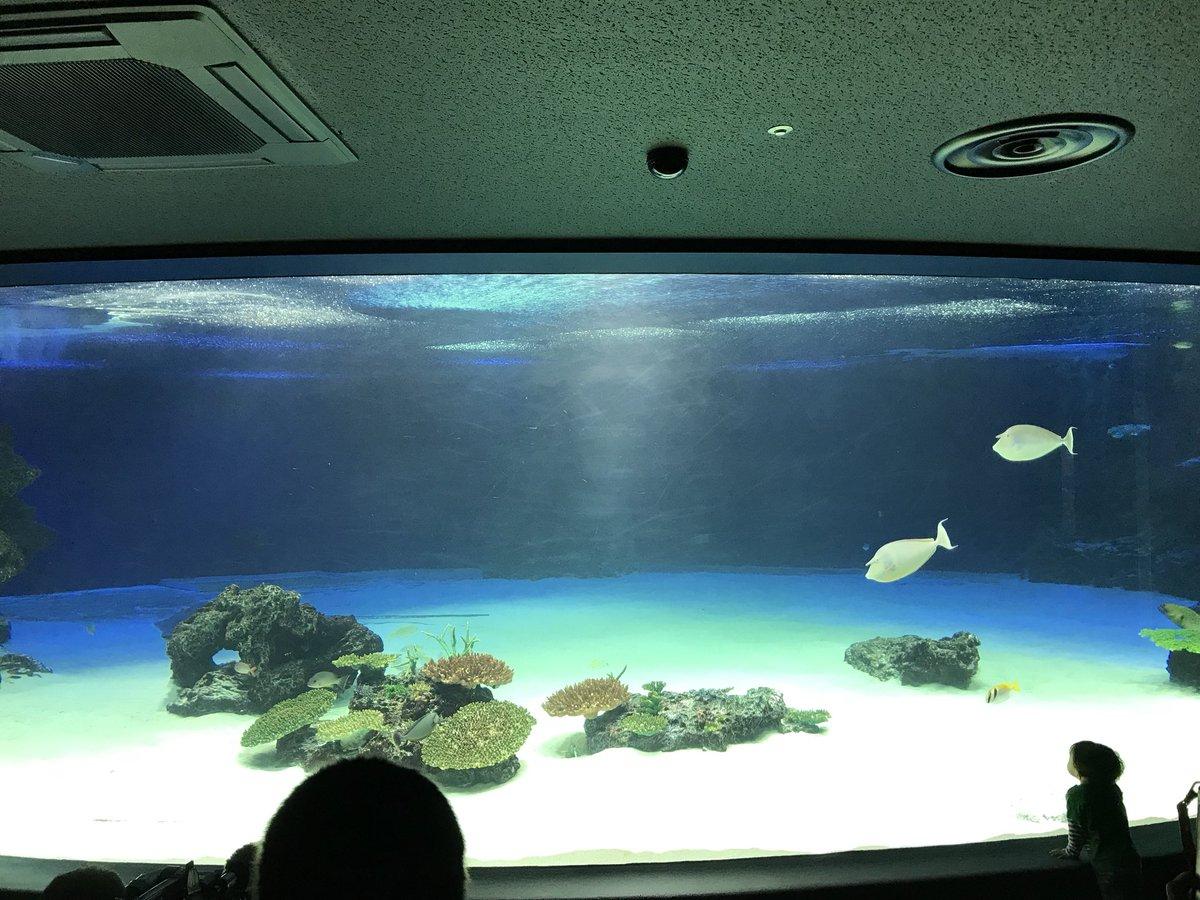 サンシャイン水族館の異変。水槽から94%の生体がいなくなった。