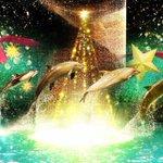 アクアパーク品川のクリスマス「スターアクアリウム バイ ネイキッド」昼夜異なるドルフィンショー fa…
