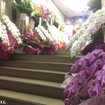 ルヴァンカップ優勝のお祝いの花が長居事務所にもたくさん届いております!皆様のご声援、本当にありがとう…
