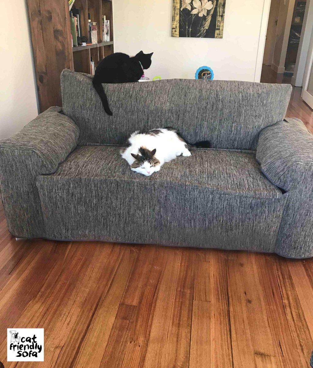 Cat Friendly Sofa CatFriendlySofa Twitter