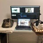 PC環境が快適すぎて何も手につかない!可愛すぎる猫たち!