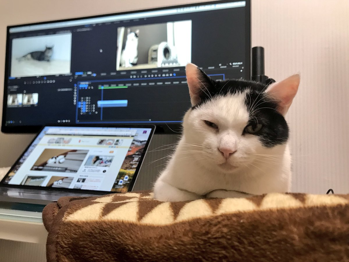 PC環境が快適すぎて何も手につかないwww可愛すぎる猫たちwww