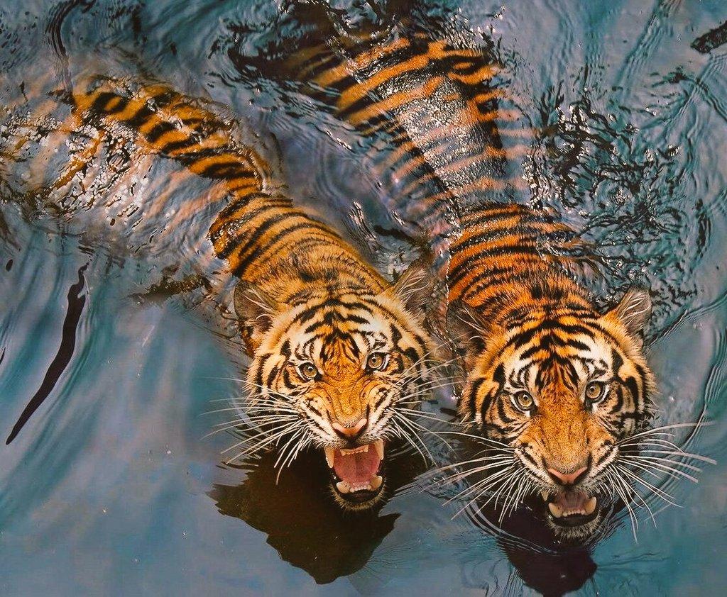 Днем, картинки движущихся животных