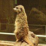 おはようございます。小獣館のミーアキャットから。今日一日をはじめます。 pic.twitter.co…