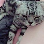 ベッドの端に頭置いてる赤ちゃん発見。こんにちは🐱 pic.twitter.com/qI9kOL92I…