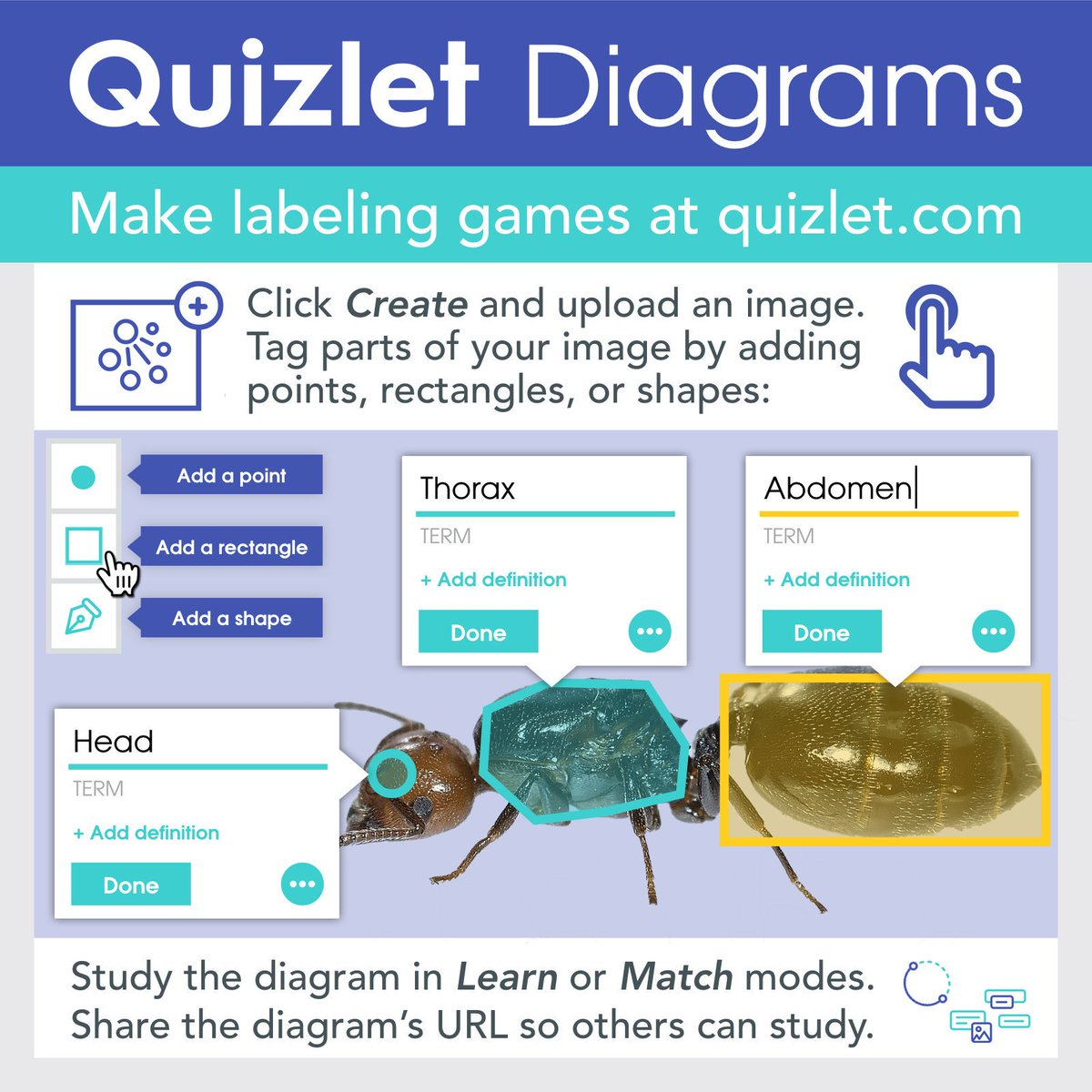 Tony vincent on twitter have you seen quizlet diagrams you tony vincent on twitter have you seen quizlet diagrams you can create study share labeled images gaetc examples advice ccuart Choice Image