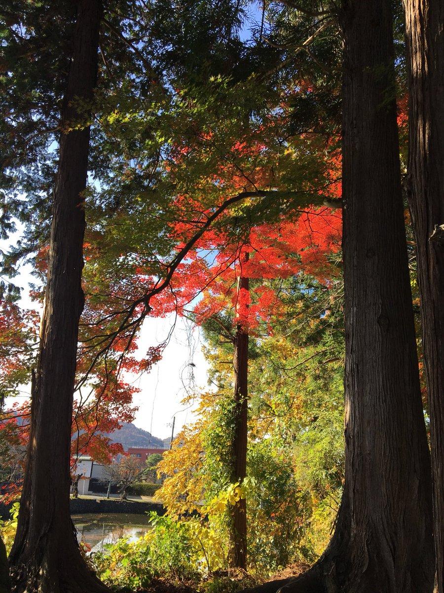 #近いよ米沢  #東北中央自動車道路 無料区間あり! #米沢 いらしてね♡ #上杉神社 は賑わってるね♡嬉しいな! #米沢八湯 も、ぜひ!いらしてね♡写真は #小野川温泉 と上杉神社