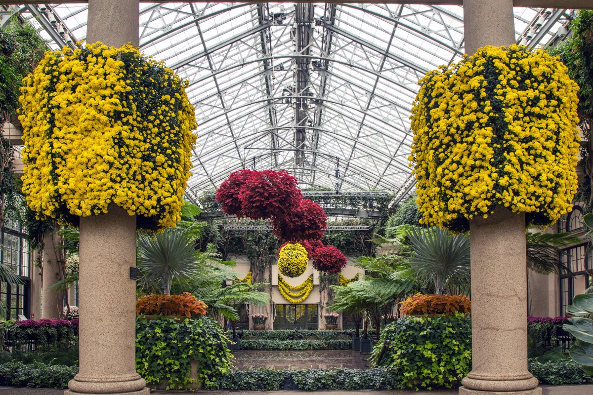 This Weekend Enjoy Chrysanthemum Festival At Peak Bloom Discover What Makes Longwood Tradition So Amazing