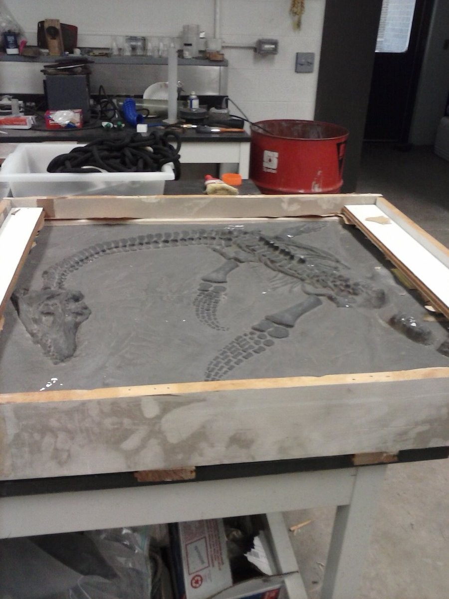 test Twitter Media - RT @JoeWebbPeoples: Plesiosaurus macrocephalus cast down from penthouse - to be installed on wall https://t.co/ySgs5QQS81