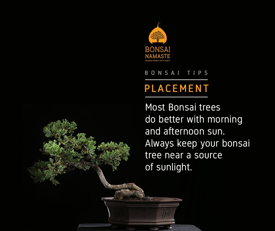 Shree Bonsai (@shreebonsai) | Twitter