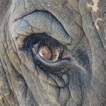 今日は「美しいまつ毛の日」。制定されたのは2011年からですが、哺乳類のまつ毛は数千万年前から、目に…