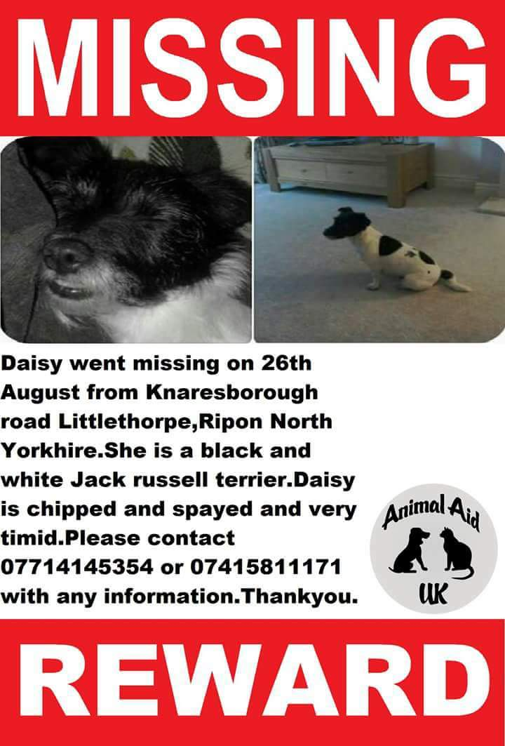#finddaisy missing from #Ripon #NorthYorkshire pls share <br>http://pic.twitter.com/88OeifszOa