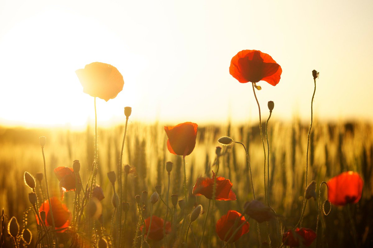Fulbright Canada On Twitter Today On Remembrance Day And Veterans
