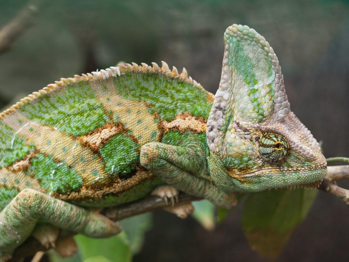 we rate lizards weratelizards twitter