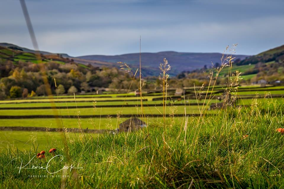 #Swaledale Notice the Copper coloured #mushrooms #Yorkshireincolour<br>http://pic.twitter.com/g04cpxHYmm