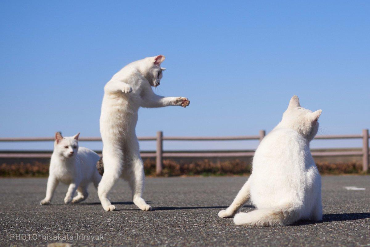 白猫拳の厳しい修行風景