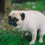 犬のうんちで方角が分かる! 犬は北南に体を向けて用を足す──犬の行動と磁場の関係についての研究new…