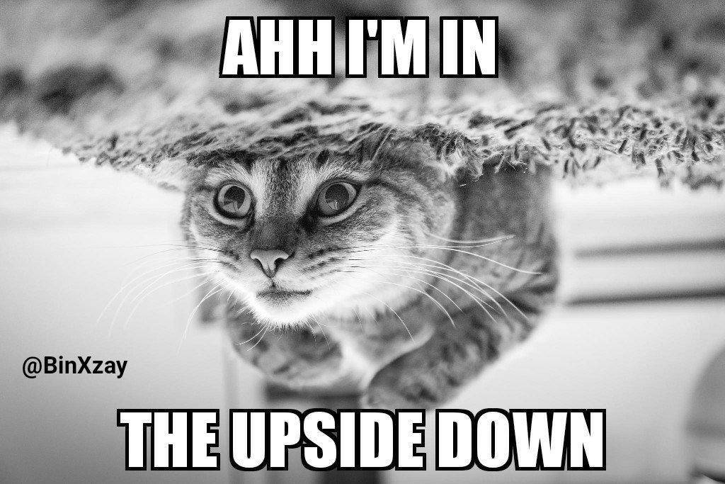 DO_4TTlVwAA0CfM catmeme hashtag on twitter,Get Down Cat Meme