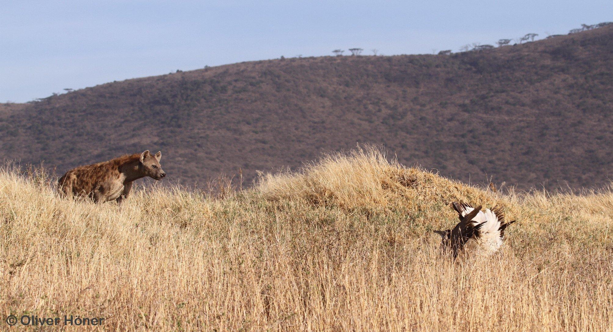 opțiunile binare înșelătoare hyenas)