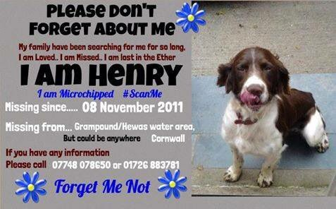 Oh HENRY where did you go? That cold day 8/11/11 #chipped &amp; not one #vet thought of checking your chip   Your family have #neverforgotten you&amp;still look  for you EVERYWHERE  #Grampound #Hewas water area #Cornwall<br>http://pic.twitter.com/dCMDAhGDUp