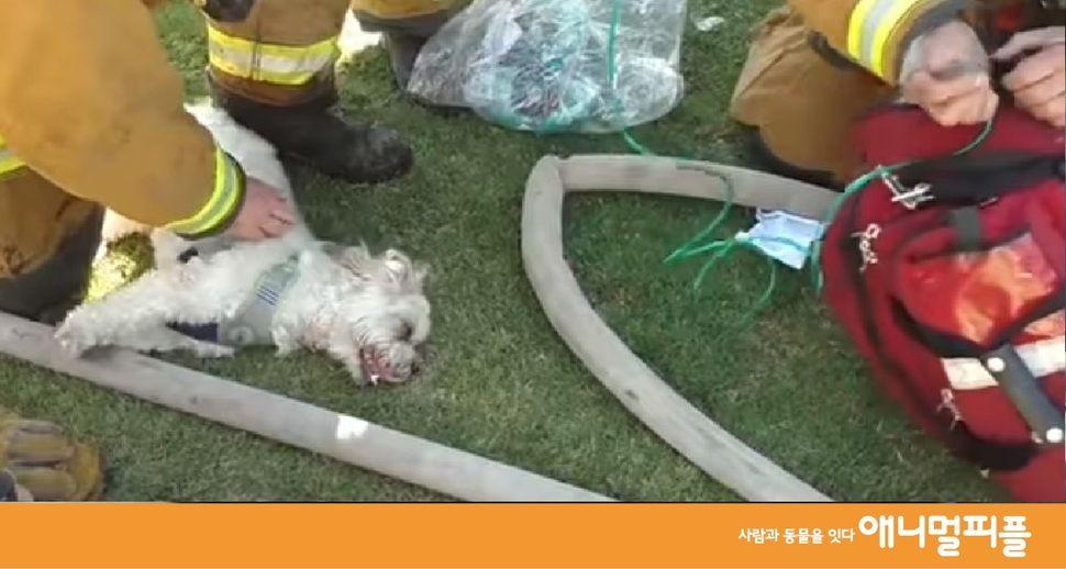 [영상] 화재 현장서 구조된 강아지를 살린 것은? https://t.co/mNVac2Ax6U