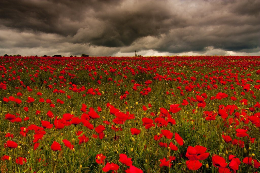 We will remember them #RemembranceSunday https://t.co/hdF86Xz5vc