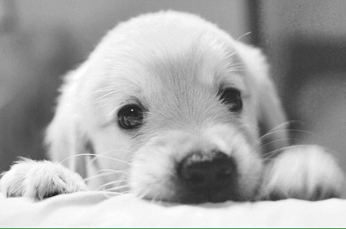 How blessed we are to share our lives with dogs. #dogsarelove <br>http://pic.twitter.com/nVOZY8FHQM