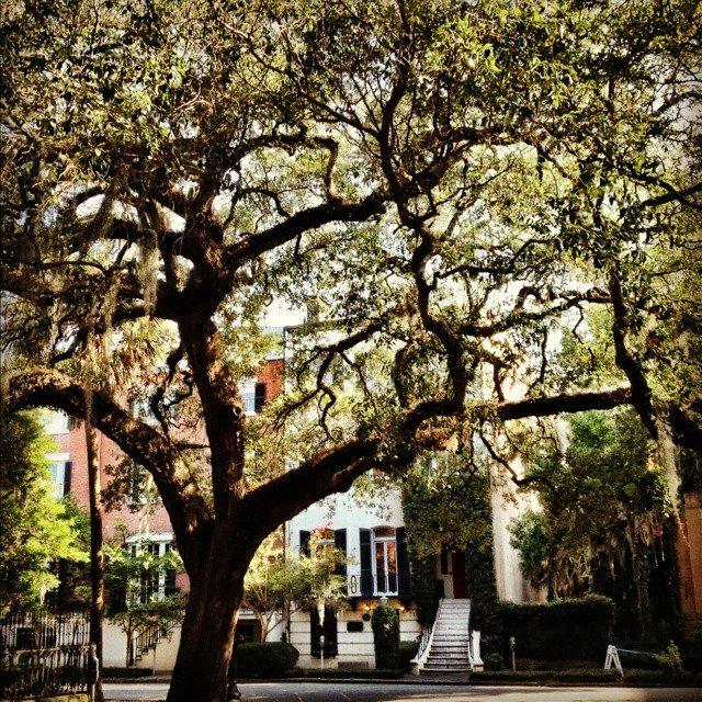 The majestic Live Oaks complete the beauty of Savannah! #savannah #segway #liveoak <br>http://pic.twitter.com/Kho8i8ObNP