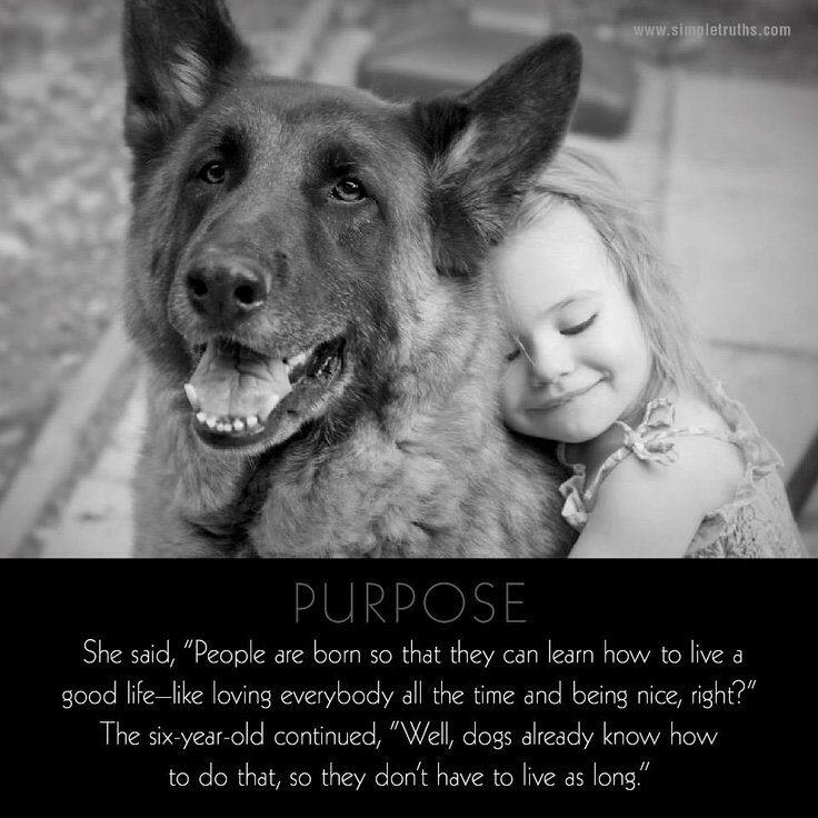 Dogs give us purpose. #dogsarelove <br>http://pic.twitter.com/so5ZqrDdg9