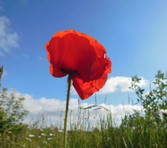 #LestWeForget #RememberThem  '....For our tomorrow they gave their today..'