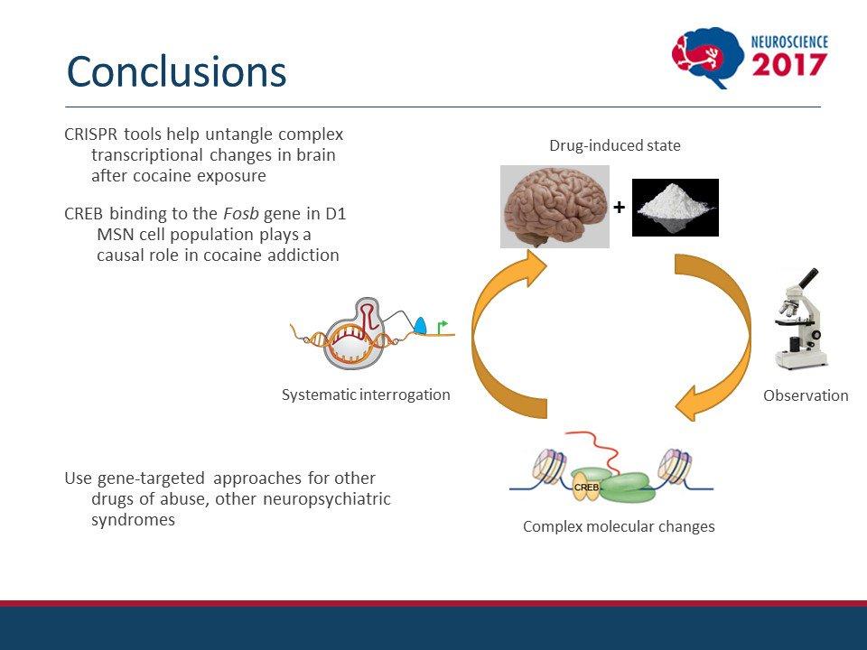 Neuroscientists Illuminate Role Of >> The Society For Neuroscience Sfn On Twitter Hamilton S