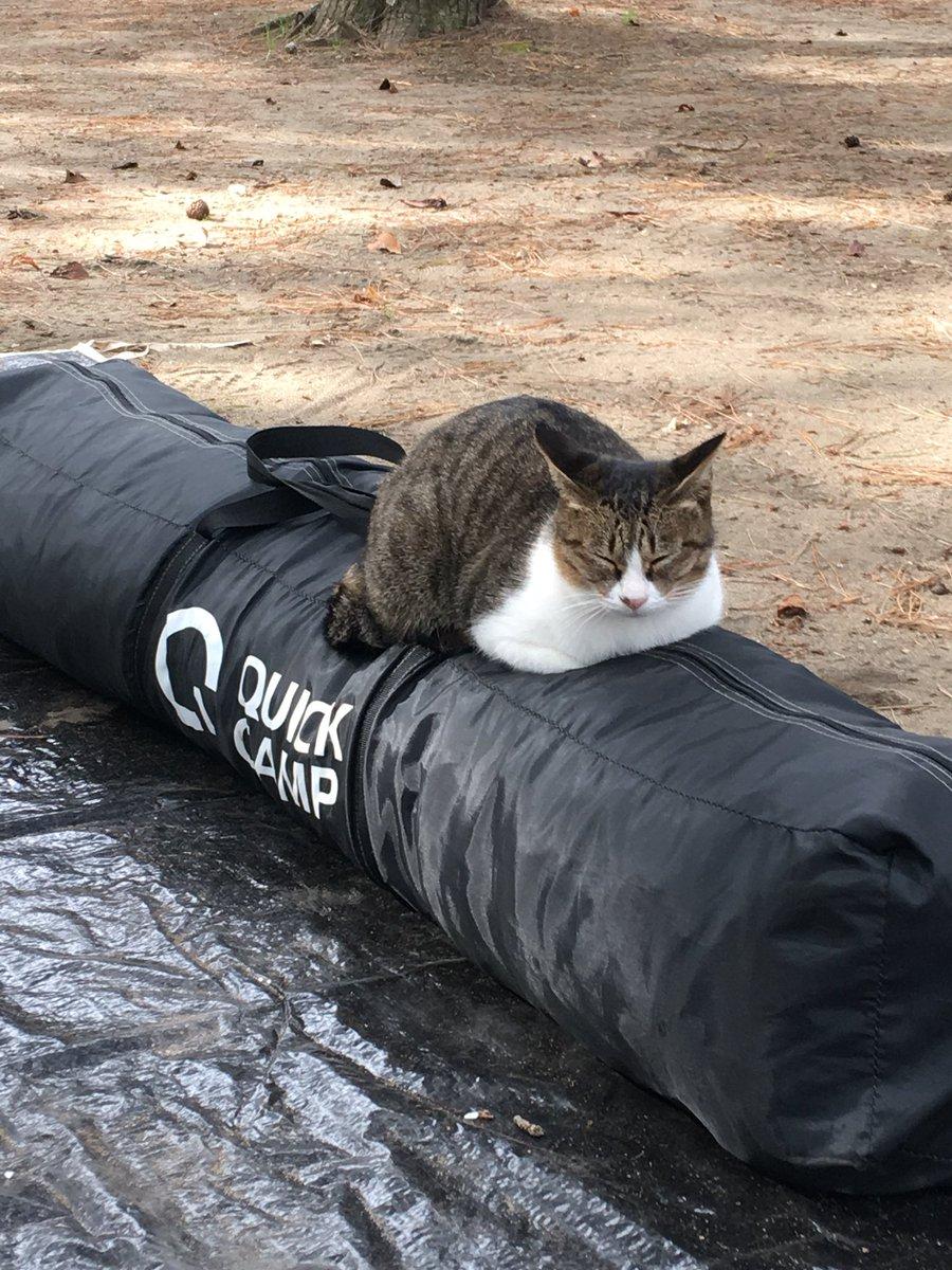 キャンプ撤収してたら猫が来て居座って撤収出来ない どうしたもんだが