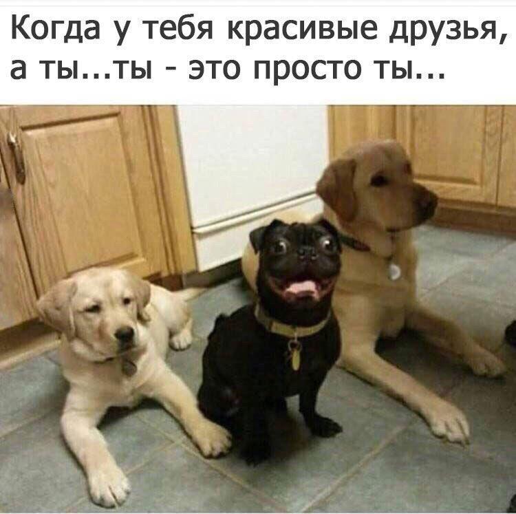 Пожалуйста, картинки собак со смешными надписями