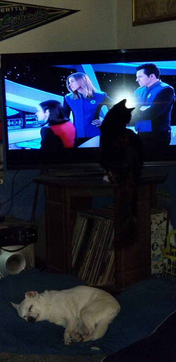 @SethMacFarlane my cat loves The Orville...