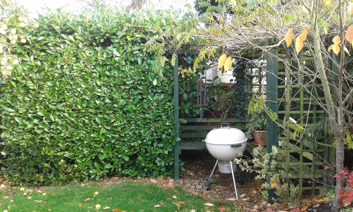 My #garden is mostly #evergreen because I can&#39;t bear the bareness of #winter #gardenchat #gardendesign #Gardenscapes #gardener<br>http://pic.twitter.com/klTXCofC5X