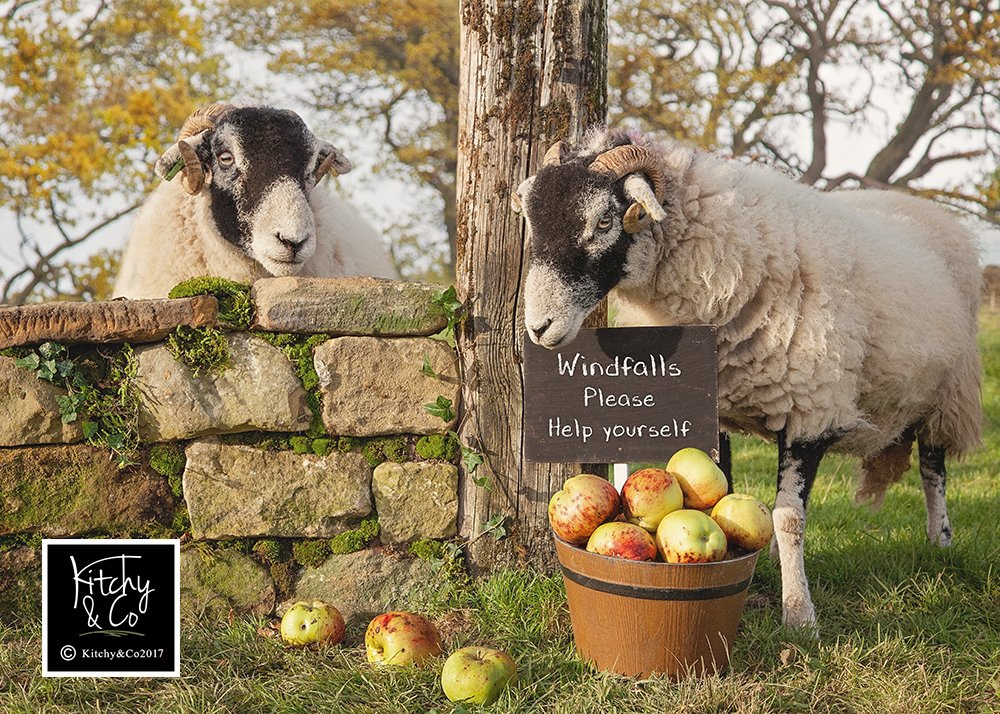 Loving our new Sheep who were more than willing to pose #Swaledale #sheep365 #apples #Yorkshire<br>http://pic.twitter.com/6G4xrQJQRT