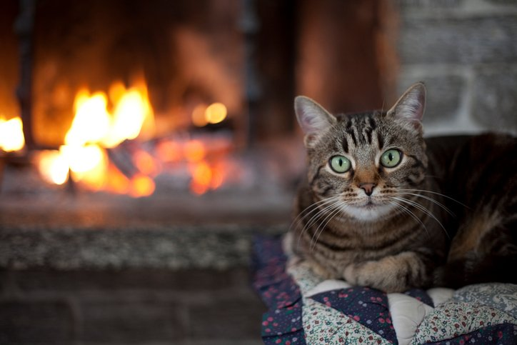 Your cat yourcatmagazine twitter its a bit cold outside this morning are your cats cosied up in front of the fire on their radiator bed or snuggled in their favourite blanket ccuart Image collections