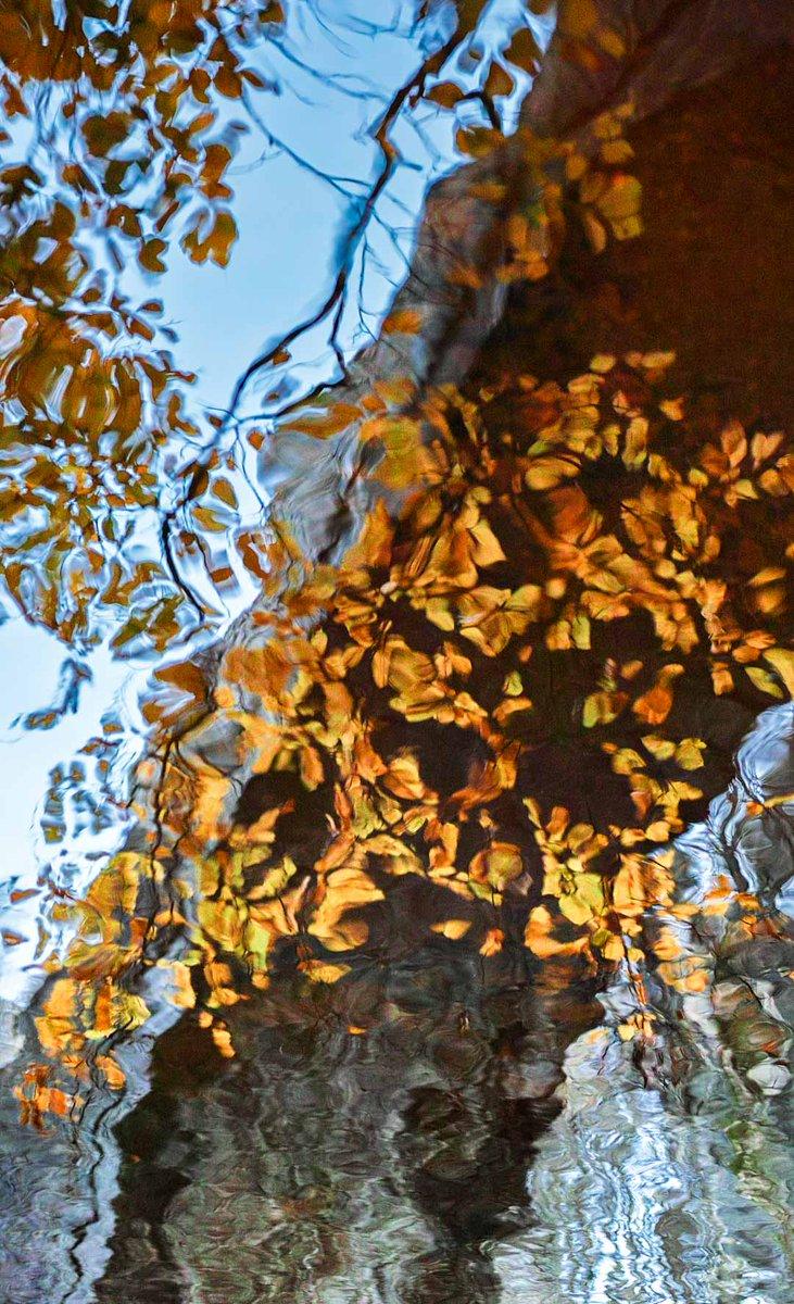 Autumn leaves reflecting under Ivelet Bridge #Swaledale #yorkshiredales #Yorkshire @SigmaImagingUK<br>http://pic.twitter.com/0YWEnderUP